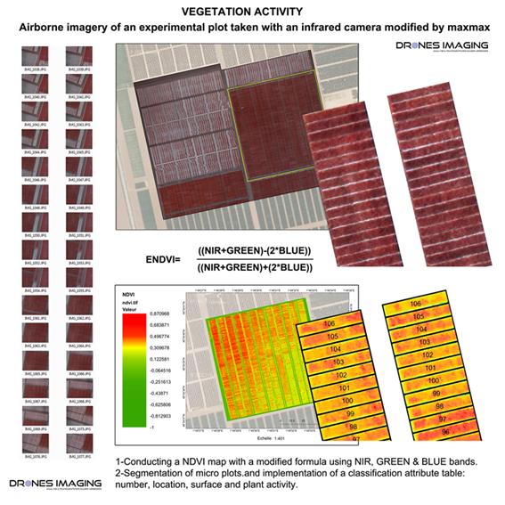 Vegetation activity: NDVI | DRONES IMAGING