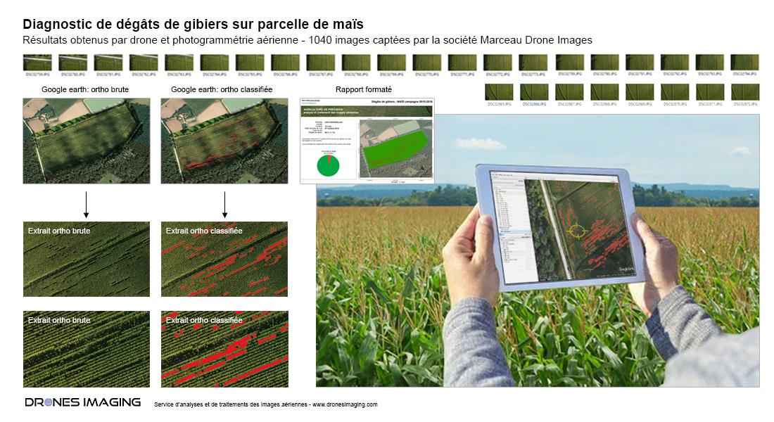 Diagnostic_dégâts_gibiers_Drones-Imaging©