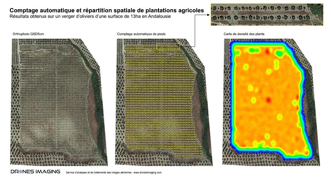 Comptage_automatique_plantations_agricoles_drones_imaging©.jpg
